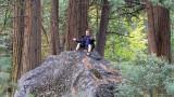 Will - tree hunting