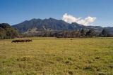 Cerro Punta horses.jpg