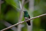 Hummingbird-Volcan.jpg