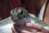 Pacified turtle.jpg