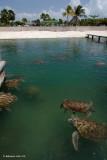 Sea Turtle Farm-Grand Cayman.jpg