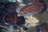 Teenage turtles.jpg