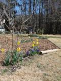 early spring blooms.jpg