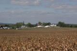from corn field.jpg