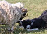 Seamus meets Tweed  (8/11)