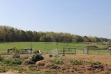 view of paddock area off barn from back deck