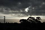 good morning glen huntly...