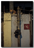 an old pipe & a cat