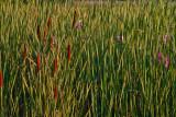 Swamp Mallows-6691.jpg