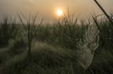 August : Cobweb