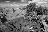grand canyon bw XC7A4197.jpg