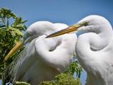 Abundant Life at Gatorland Bird Rookery