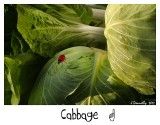 Eat your cabbage!