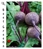 Beat the Beets