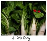 Oh boy - Bok Choy!