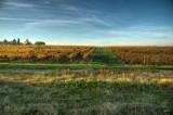 _vineyard_in_autumn