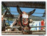 mijas burro taxi.jpg