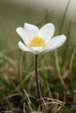 Fiori (Flowers)