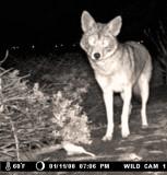 Wildlife Trail Cam