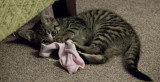 The sock is dead now