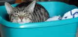 Yes..he's in a washing up bowl.....