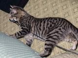 He is a cat..honest!