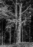 Tree among trees