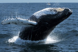 Whales 2011