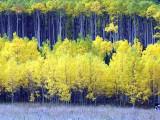 2011-fall-colorado.jpg