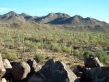 Saguara-National-Park.jpg