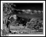 Alongside-The-Forrest-Highway-Westewrn-Australia.