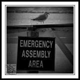 Emergency !!!!Yes I Need Feeding