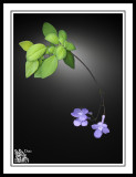 Playing-with-Violets-on-the-Scanner.