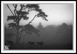 Mist-At-Sunrise-Bundanoon.