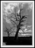 The-Ghost-Tree-Harvey.