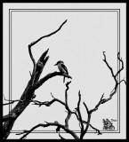 Kookaburro-Sits-In-The-Old-Gum-Tree.