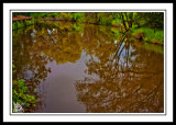 Harvey-River-Reflections.