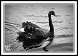 Swamp-Walk-Birdlife.