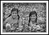 Straw-WildflowersWestern-Australia-mono.NFS