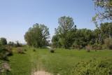 Riverine forest in Evros Delta