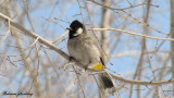 bird_of_iran