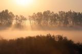 Foggy Memory