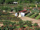 Tyler Municipal Rose Garden, Tyler, Texas, October 22 and 23, 2005