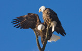 Eagle Foreplay