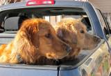 Pickup Doggies
