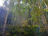 Telluride Morning, Bear Creek Trail
