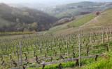 Endless Vineyards