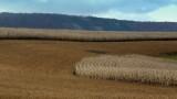 Cornfields of Nebraska