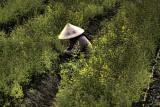 Hanoi Gardening