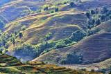 Sapa Vietnam Rice Fields